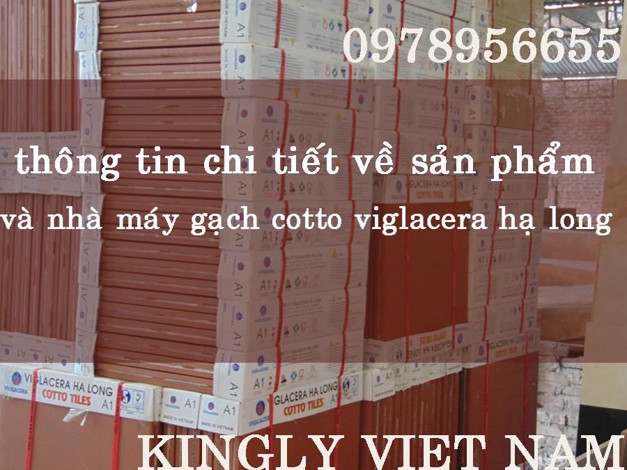 Thông Tin Chi Tiết Về Sản Phẩm Và Nhà Máy Gạch Cotto Viglacera Hạ long
